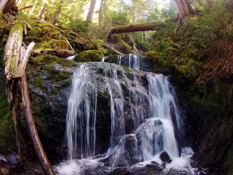 Donahue Creek Falls on the way to Flapjack Lakes in Olympic National Park