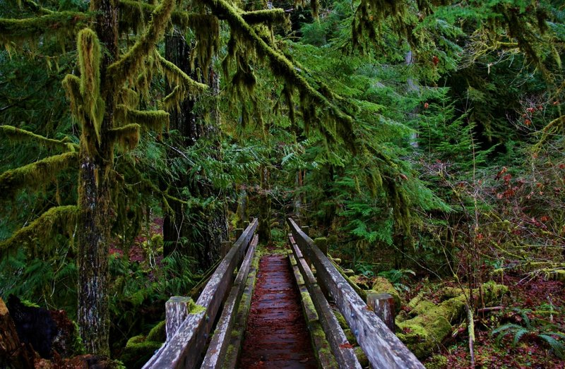 Crossing the bridge at the Shady Lane Trail in Olympic National Park