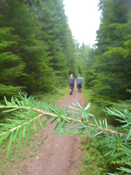 Easy strolling through beautiful forests near the start of Huckleberry Lookout
