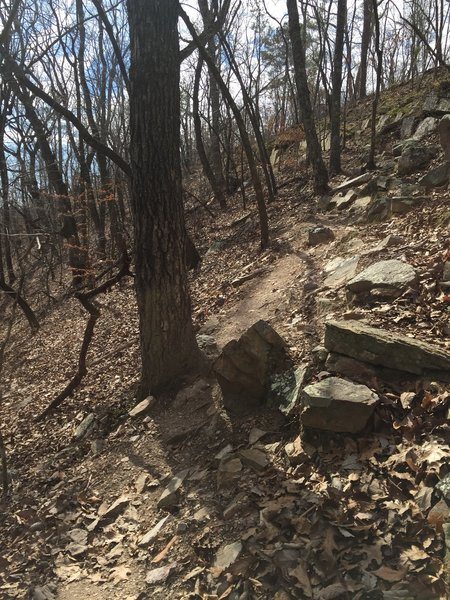 A rocky section of the Pine Mountain Trail.