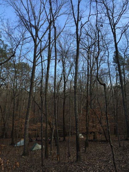 Beech Bottom Campsite, near the Pine Mountain Trail is a good place to spend a night in early February.