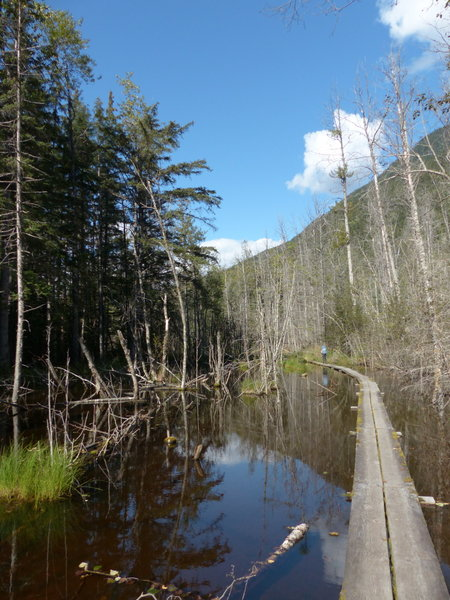 Walking through the area flooded by a beaver dam.