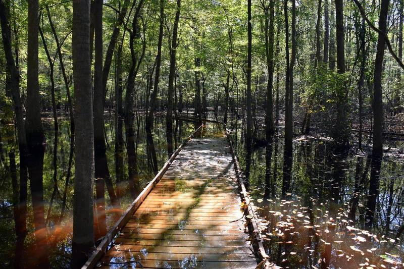 Lower boardwalk can be flooded. Check with the ranger or the website before you head out.