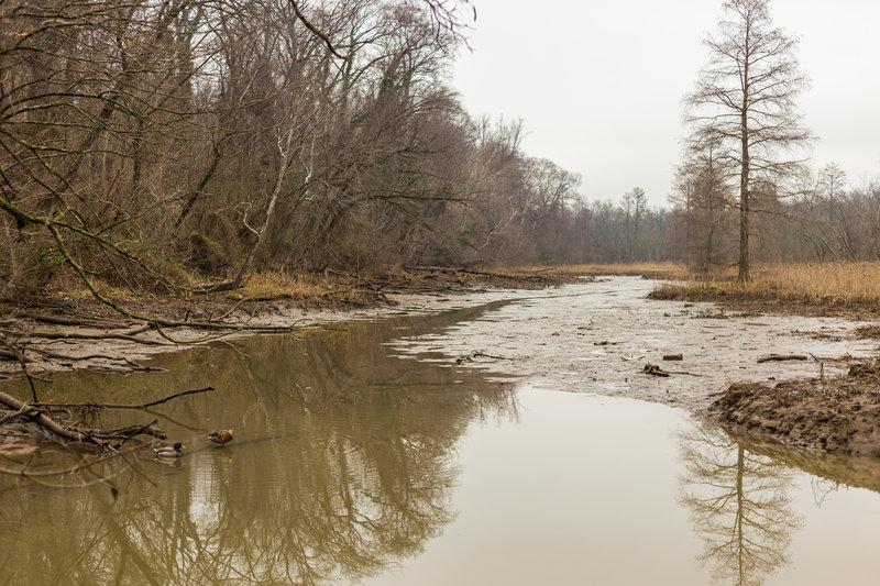 The swampy marshland at Theodore Roosevelt Island.