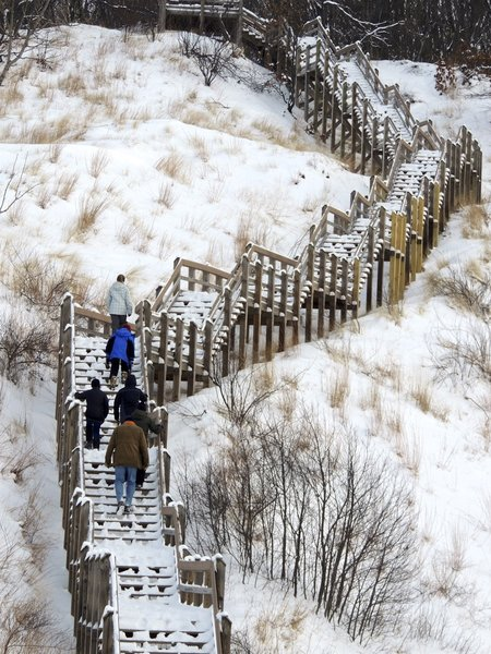 Climbing the Dune Succession Trail stairs.