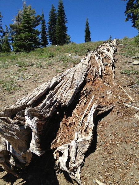 Grouse Ridge Trail.