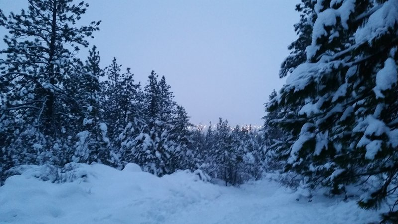 Dusk falls over the Pond Loop Trail in winter.