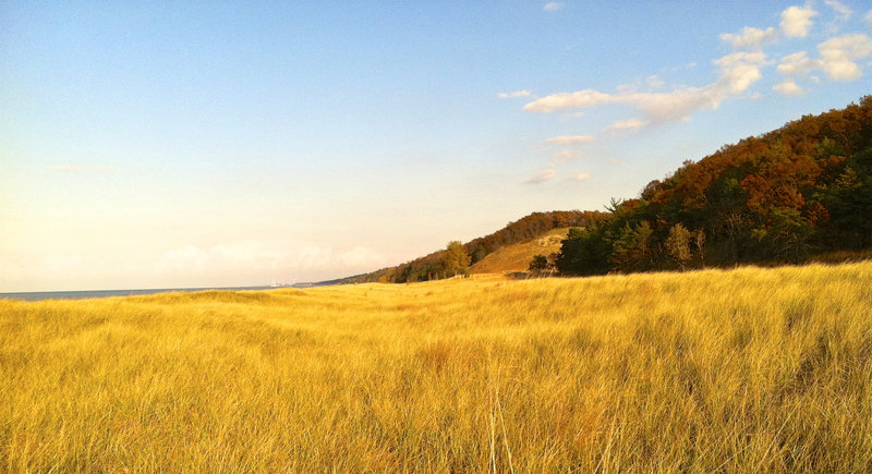 Marram grass along Lake Michigan as seen from the Cowles Bog Trail.