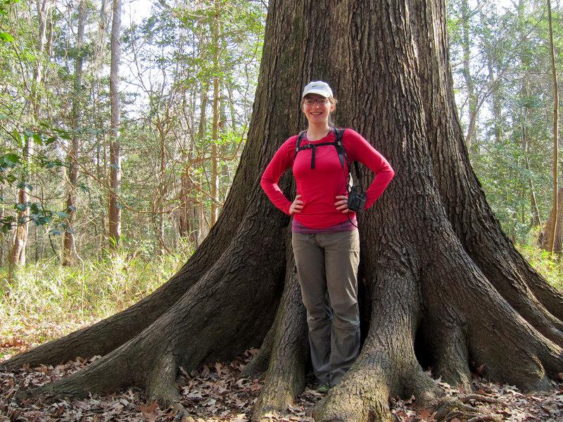 Elizabeth and Cherrybark oak (Quercus pagoda) at Congaree National Park.