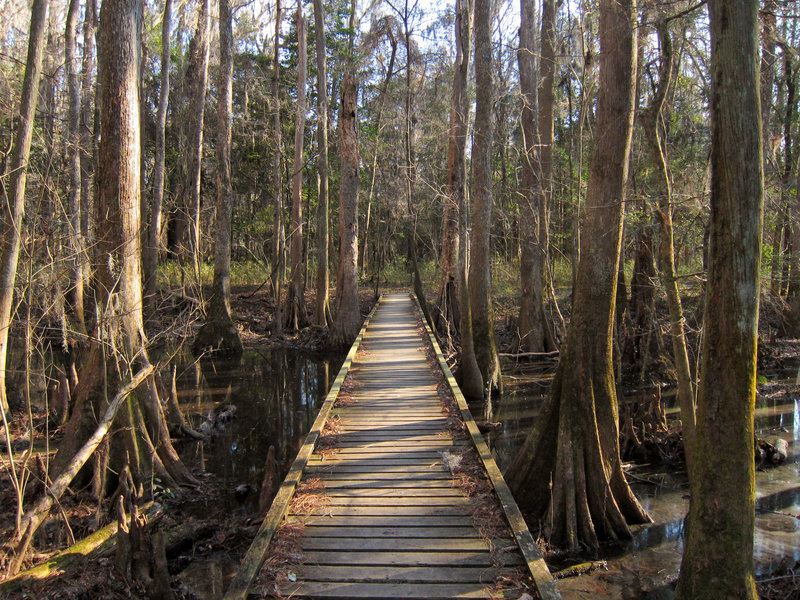 """A typical section of """"trail"""" in the Congaree National Park Boardwalk Loop."""