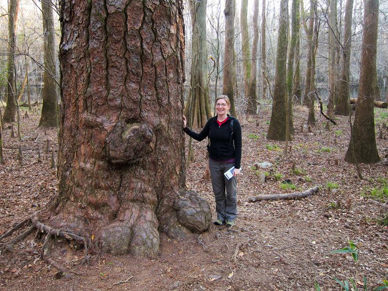 Elizabeth and a big loblolly pine (Pinus taeda) on the Boardwalk Trail.