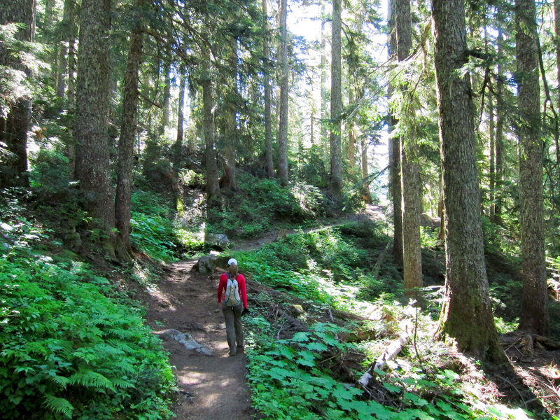 Into the woods and on the way to Cascade Pass.