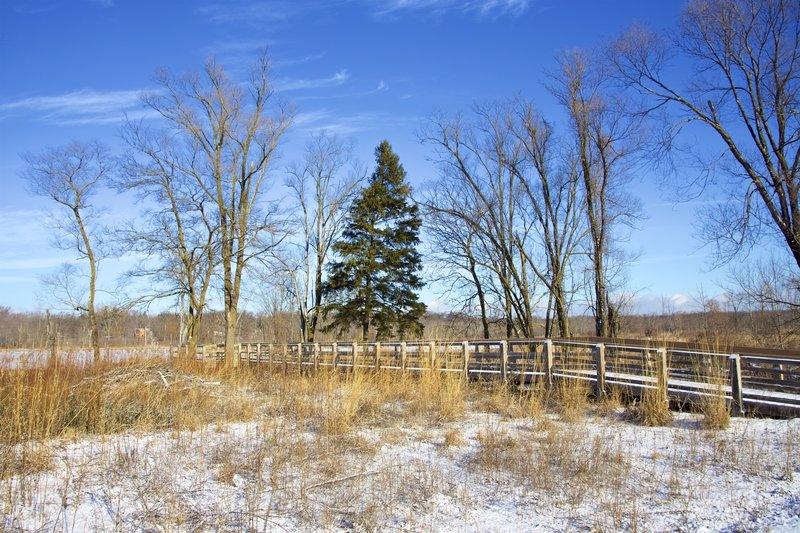 Winter view of the Great Marsh overlook.