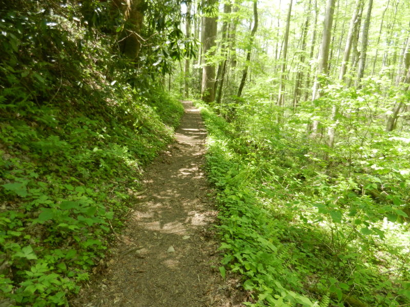 Cucumber Gap Trail - a nice trail in the woods.
