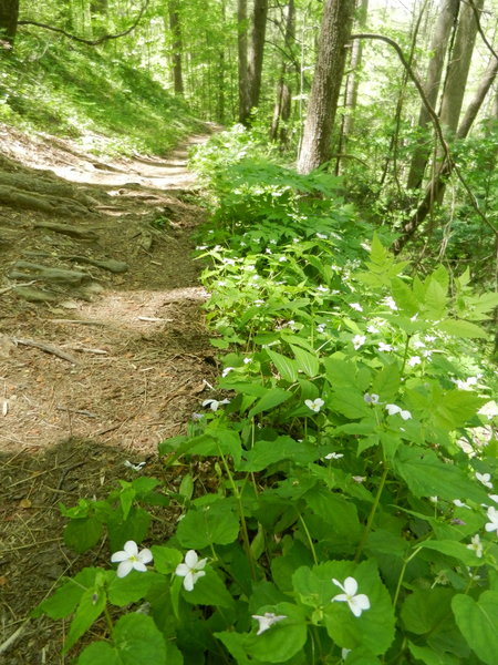Path is well-worn and has a bit of root/rock exposure. Wildflowers border the trail during springtime.