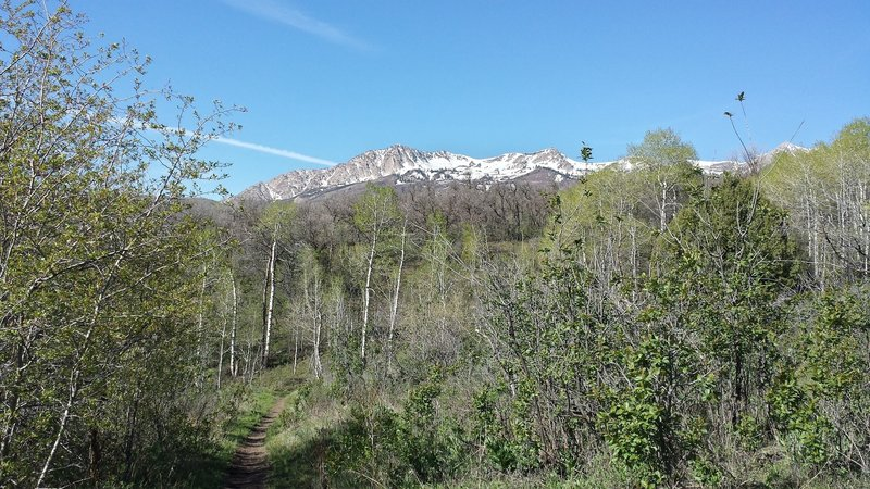 Wheeler Creek is a grind, but it sure is pretty!