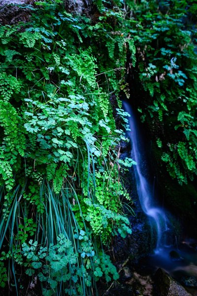 There is a secret waterfall on your left if you take the trail from the Temple of Sinawava to the Weeping Rock.