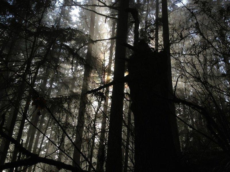 Spencer Butte trees.