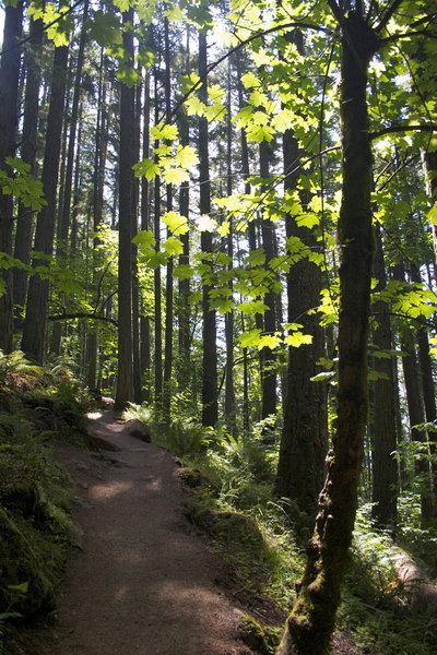 Trail on Spencer's Butte, Eugene.