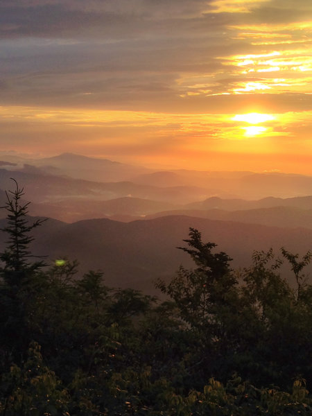 Morning glory on the Black Mountain Crest Trail.