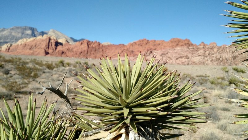 Red rocks of Red Rock Canyon