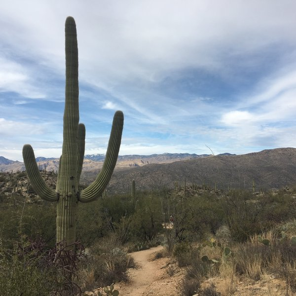 The beautiful and super easy part of the trail