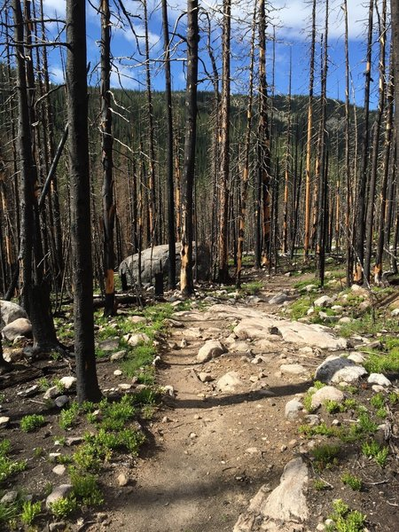 Fire damaged area of Tonahutu Creek Trail.