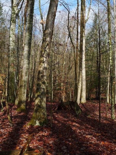 Winter woods at Bays.