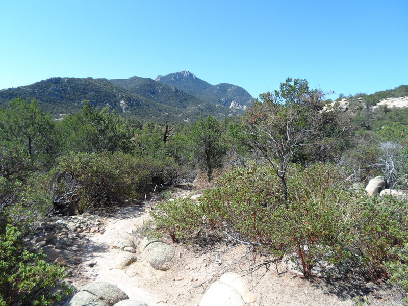 Looking at Rincon Peak from the start of the trail, near Happy Valley Campground.