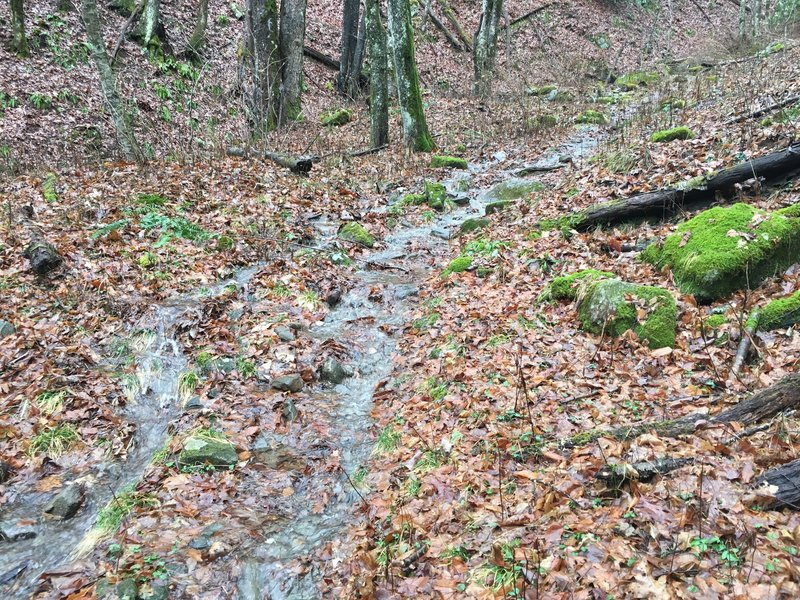 Water running down the trail after a day of rain in the GSMNP.