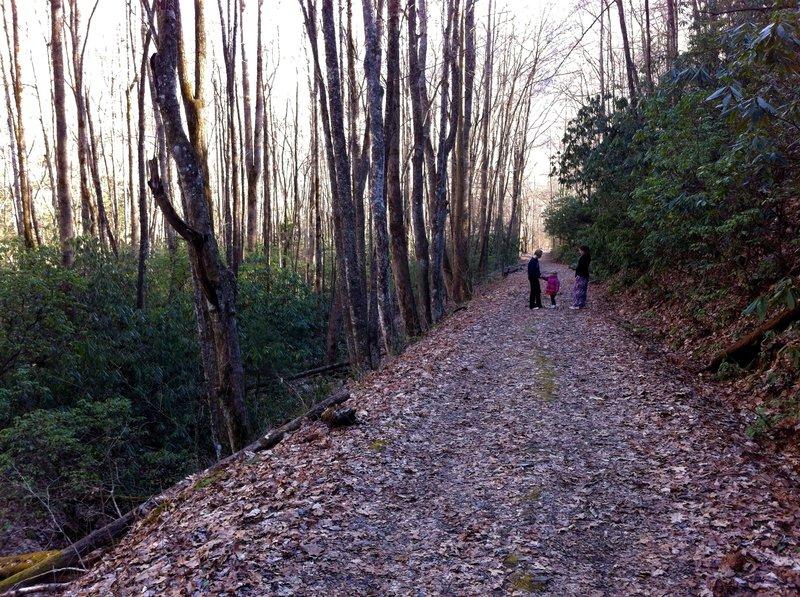 Kephart Prong Trail.
