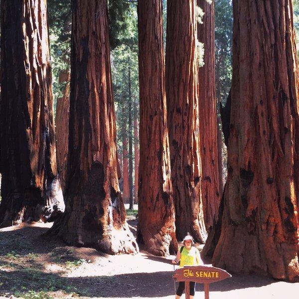MK with The Senate - Sequoia NP