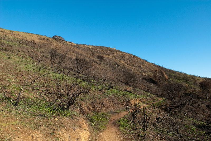 Burned hillside on Sunset Ridge Trail.