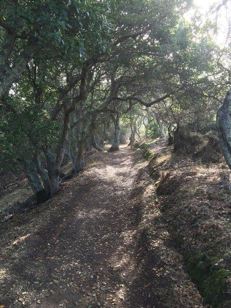 Beautiful, dense woods on N. Ridge Trail.