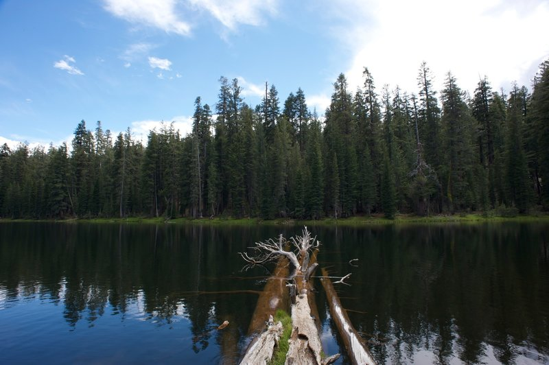 Trees in the lake.