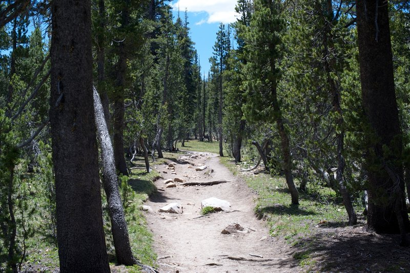 Trail headed toward Elizabeth Lake.
