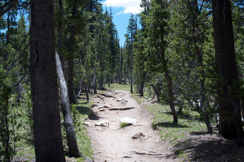 Trail headed toward Elizabeth Lake.