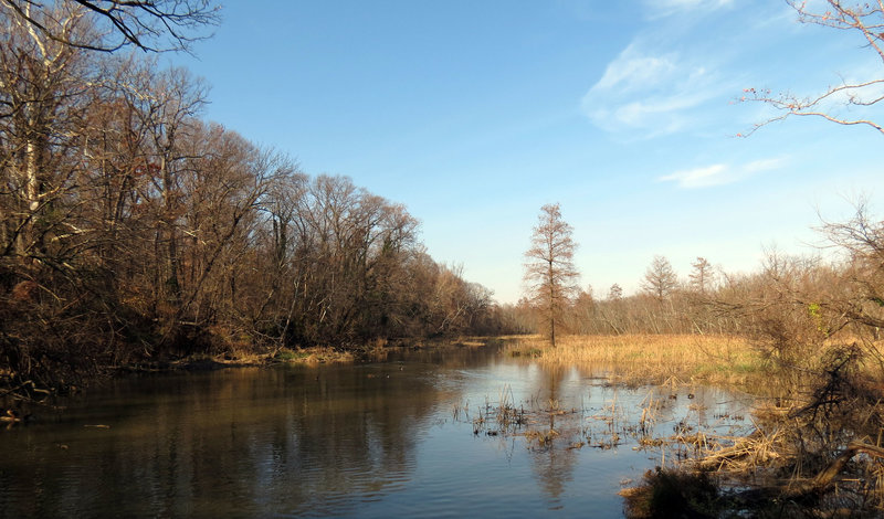 Roosevelt Island Marsh