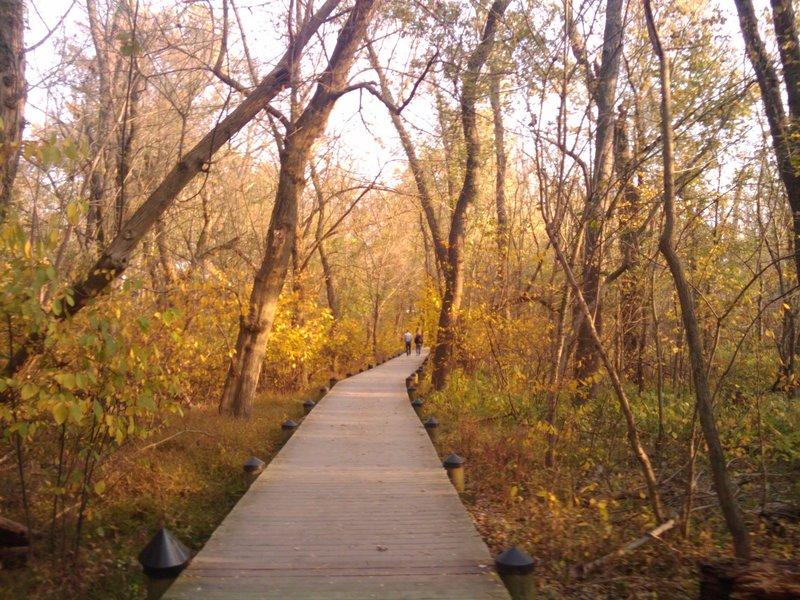Swamp Trail - Theodore Roosevelt Island.