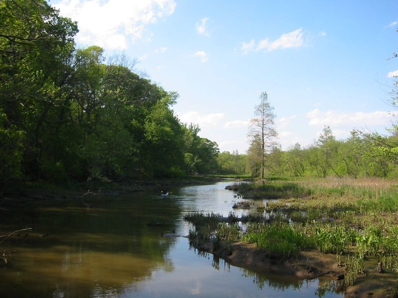 Theodore Roosevelt Island scene