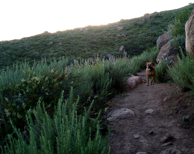 Evening hike: four-legged hiker.