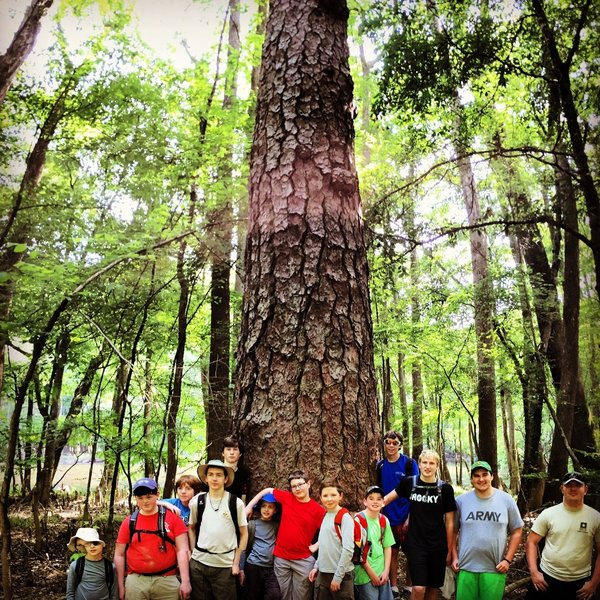 Troop 68 and one of the giant Loblolly Pines at Congaree NP.