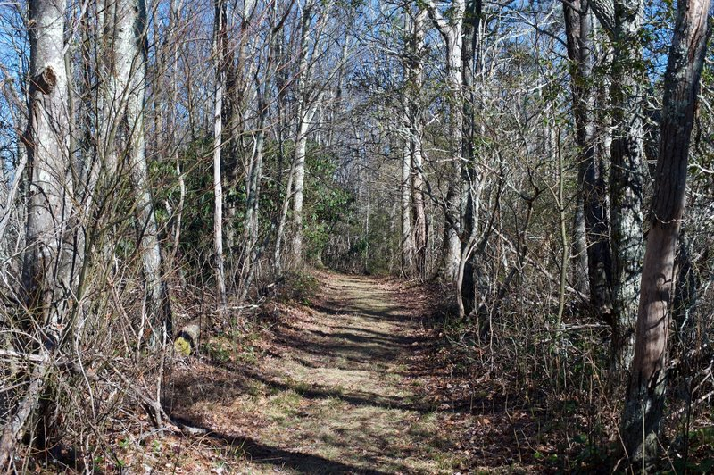 The top portion of the trail is fairly wide and grassy, making for easy hiking as you climb toward the Cove Mountain Summit.