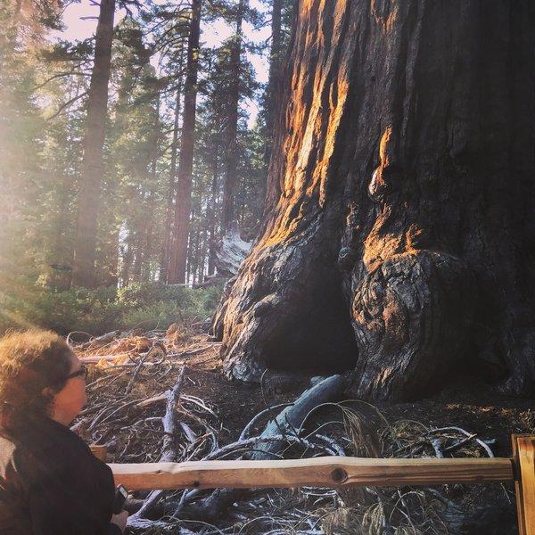 Sequoias in the Grant Grove