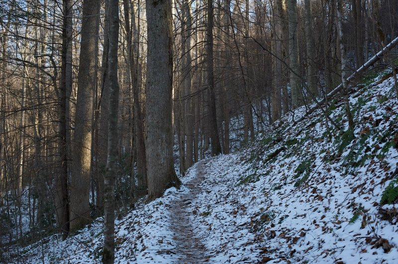 Cucumber Gap trail as it narrows and begins the steady climb uphill.