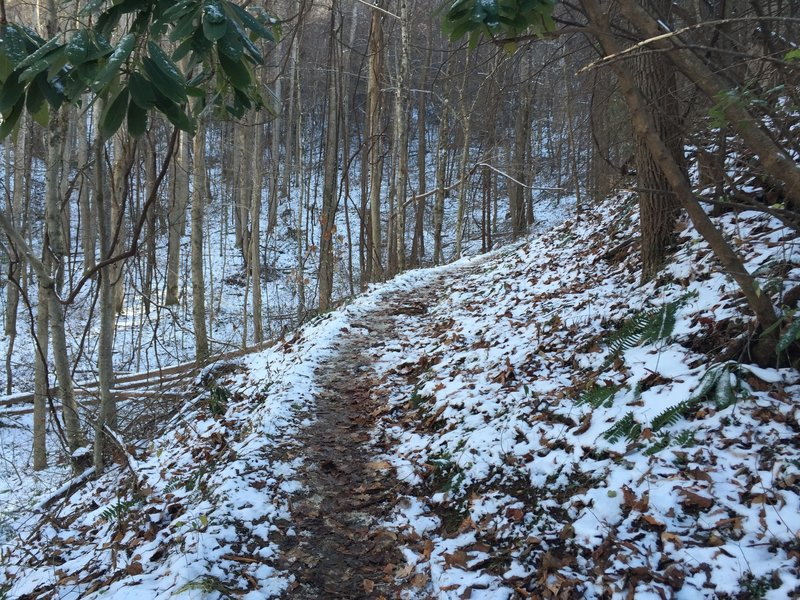 Cucumber Gap Trail as it winds through the forest in November.