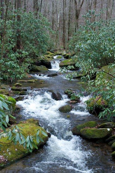Jake's Creek as it flows past the Meigs Mountain Trail.