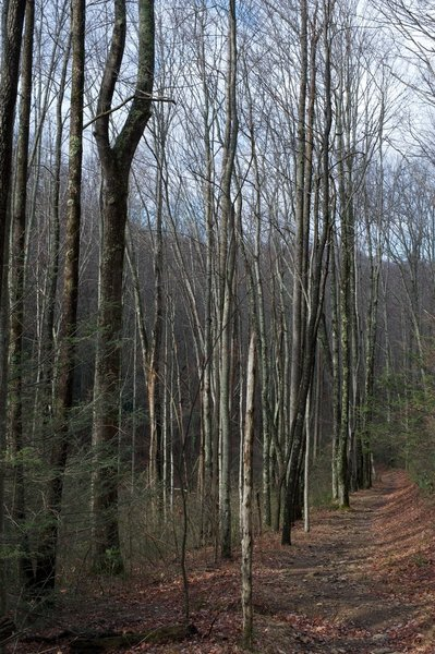 Miens Mountain Trail as it winds through the woods.