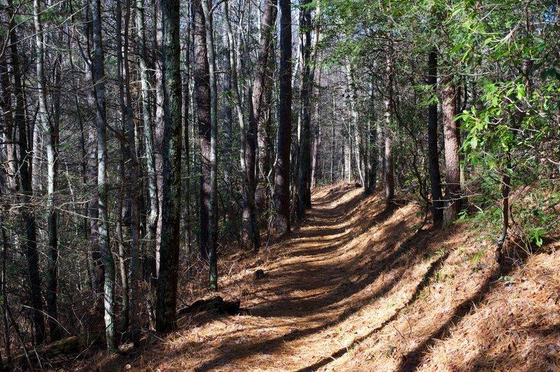 Lumber Ridge Trail making it's way through the trees.