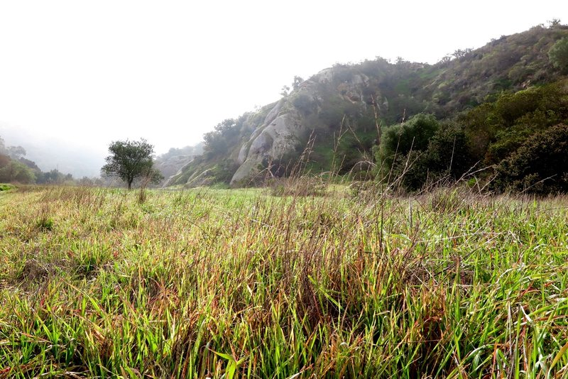 South east view of Laurel Canyon Trail.